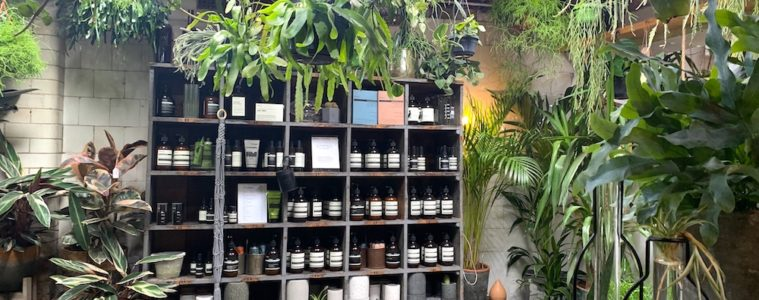 forest plant shop east dulwich london featured image