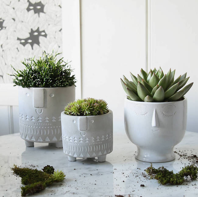 face planter collection clem and co notonthehighstreet